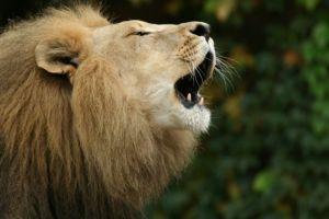 leon_viejo
